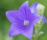 「花」の画像検索結果