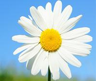 花図鑑・植物図鑑で調べたい